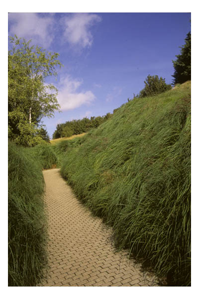 France—Caen—D-Day Museum. Path through grasses at memorial
