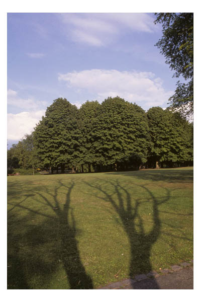 tree shadows, late afternoon, in Het Park, Rotterdam, The Netherlands