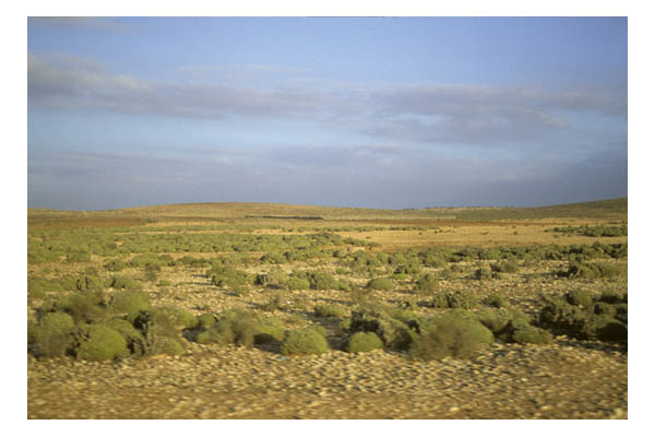 Tiznit, Morocco—sagebrush and golden barren land outside Berber town